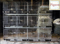 pigeon cage,best sale metal pigeon cage ,galvanized layer pigeon cage price