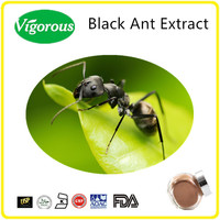 natural high quality sex for men black ant powder / black ant pill / 10:1 Black Ant Extract