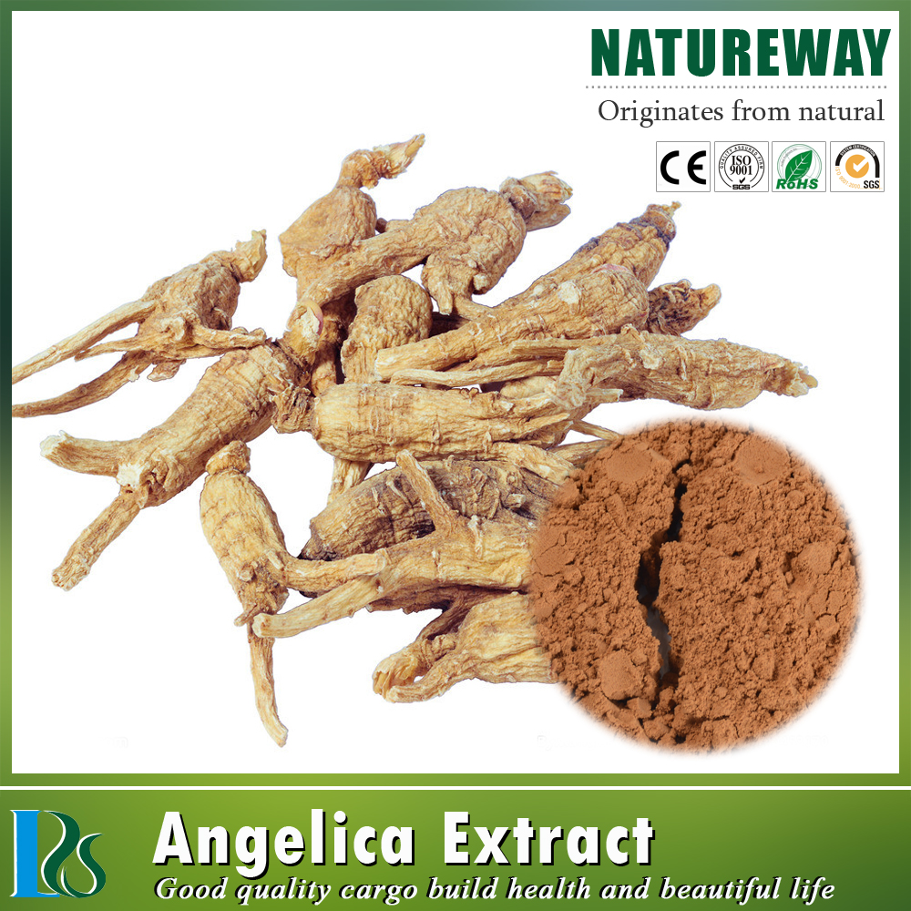 Chinese herbal extract Angelica dahurica powder extract