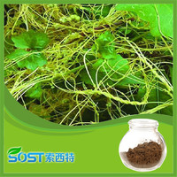 Factory supply bulk natural pure Cuscuta seed extract