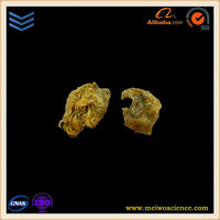 vivid silicon rubber pathological specimens of breast cancer plastinated body parts for medical teaching