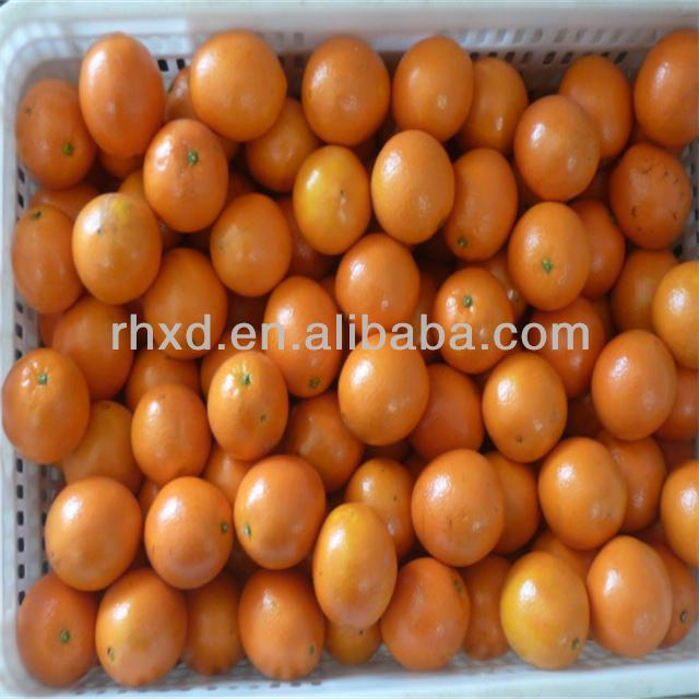 Wholesale price orange fruit