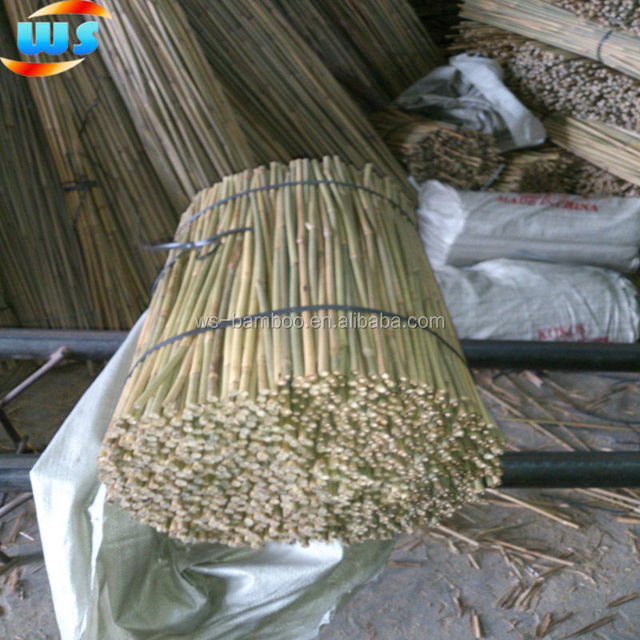 Bamboo Agriculture Products/Bamboo cane support tree WS 60cm 8-10mm