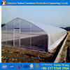 PROMOTION clearly economic Agricultural single tunnel greenhouse for sale invernadero