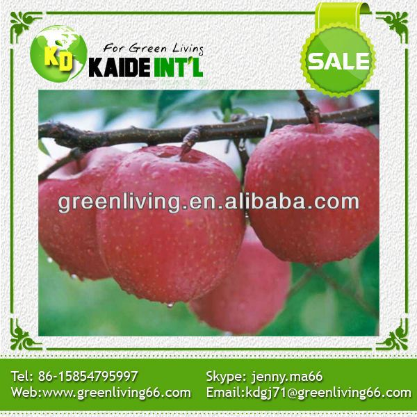 wholesale price china exporter red fuji fresh apple