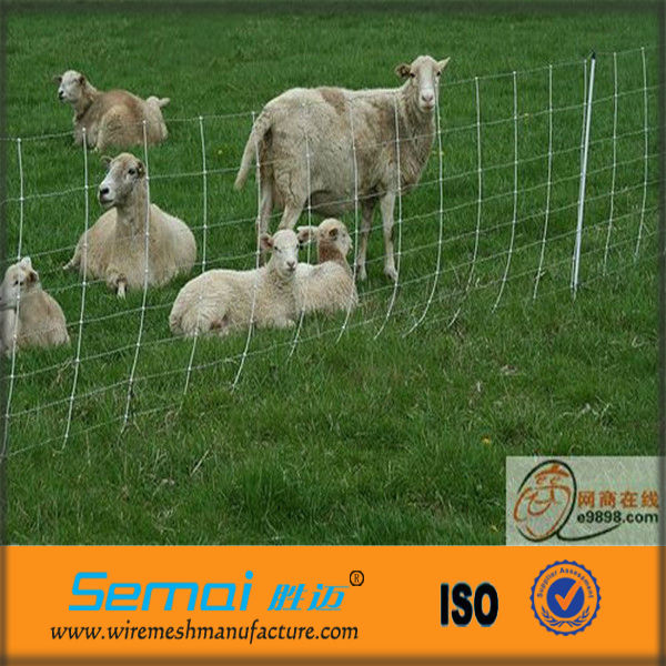 Galvanized Sheep Wire Fence Panels Sales (ISO9001 Certificate)
