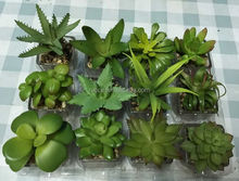 wholesale PVC artificial mixed succulent plants