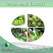 100% Natural yerba mate tea Extract 5:1 ,Latin Name: Ilex paraguariensis