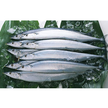 Frozen marlin fish frozen pacific saury for sale