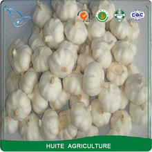 4cm 5cm 5.5cm 6cm Pure White Fresh Garlic