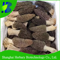 Natural herbal supplement morel mushrooms for sale, rare edible mushroom