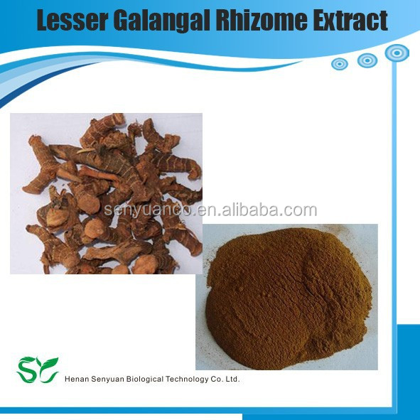 100% Natural Lesser Galangal Rhizome Extract