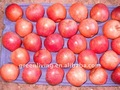 fresh qinguan apple(chinese delicious juice)