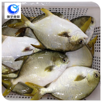 best selling products wholesale frozen fish golden pompano pomfret
