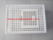 Plastic crate for chicken transportation day old chicks transportation for sale