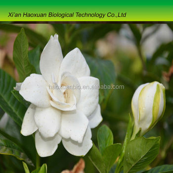 New arrival Gardenia Jasminoides Extract Geniposide 98% for sale