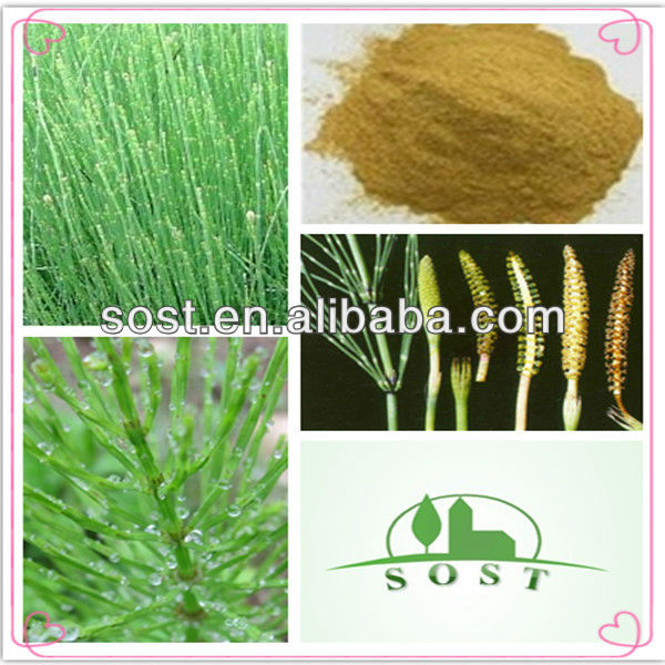 best price horsetail grass extract