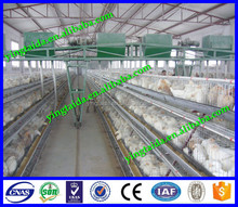 Factory high quality design layer chicken farming equipment