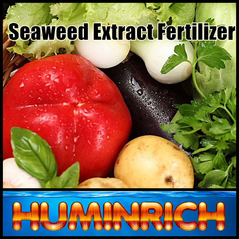 Huminrich Kelp Source Seaweed Extract Organic Fertilizer Full Nutrient Fertilzer Sea Kelp