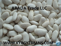 9+mm Kyrgyz white kidney beans 2014 crop