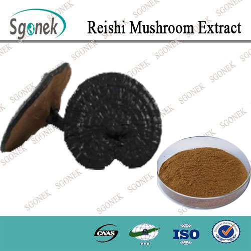 Chinese red reishi mushroom extract /reishi mushroom extract powder/red reishi extract
