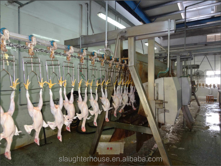 500bph Standard chicken dressing machine