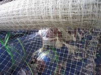 Good quality Pea and Bean net(manufacturer price)