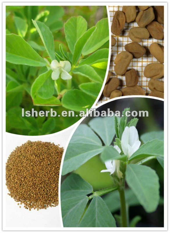 High Quality Fenugreek Seed Extract 4-Hydroxyisoleucine 20% 60%