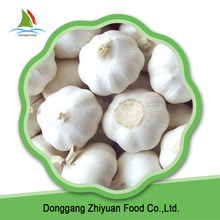 China new season reasonable price pure white fresh garlic