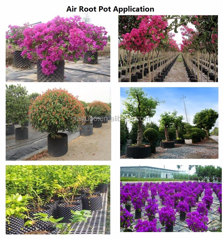 wholesale good quality plastic black pot for tree plant root control