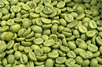 Green coffe bean Extract From Coffea Arabica L Chlorogenic acids and Total Chorogenic acids