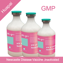 newcastle disease vaccine