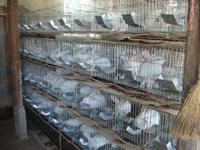 High quality 9/12/16/20/24 capacity rabbit cage in rabbit farm