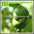 Chinese Guava Leaf Extract