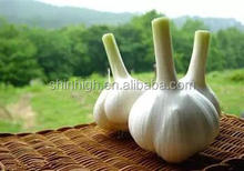 100% pure aged garlic extract Alliin allicin powder