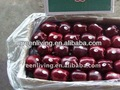 2014 yantai full blush fresh fuji apple(low price)