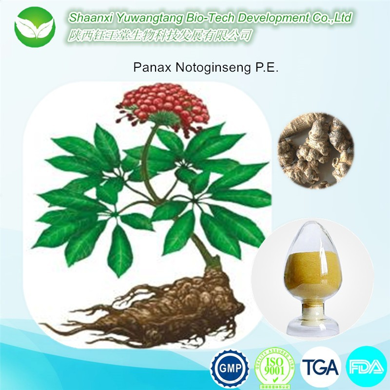 Hot selling Panax Notoginseng P.E. power
