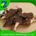 2017 Newest natural health care product morel mushrooms