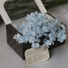 Natural preserved flower fresh preserved dried hydrangea on sale