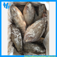 Seafood frozen tilapia fish whole for sale