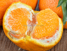 Best price name of all citrus fruit mandarin lemon