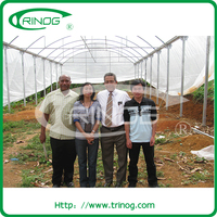 Large Size Greenhouse Farm For Sale