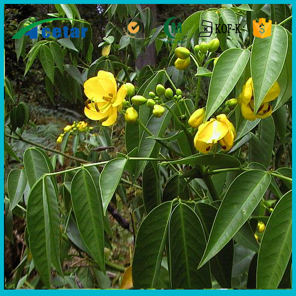 Free sample organic product senna leaf extract