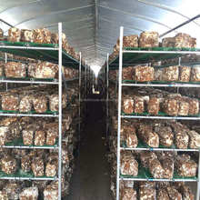 Low cost mushroom greenhouse in good quality