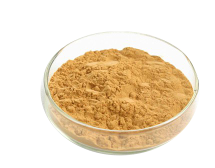high quality echinacea angustifolia extract OEM