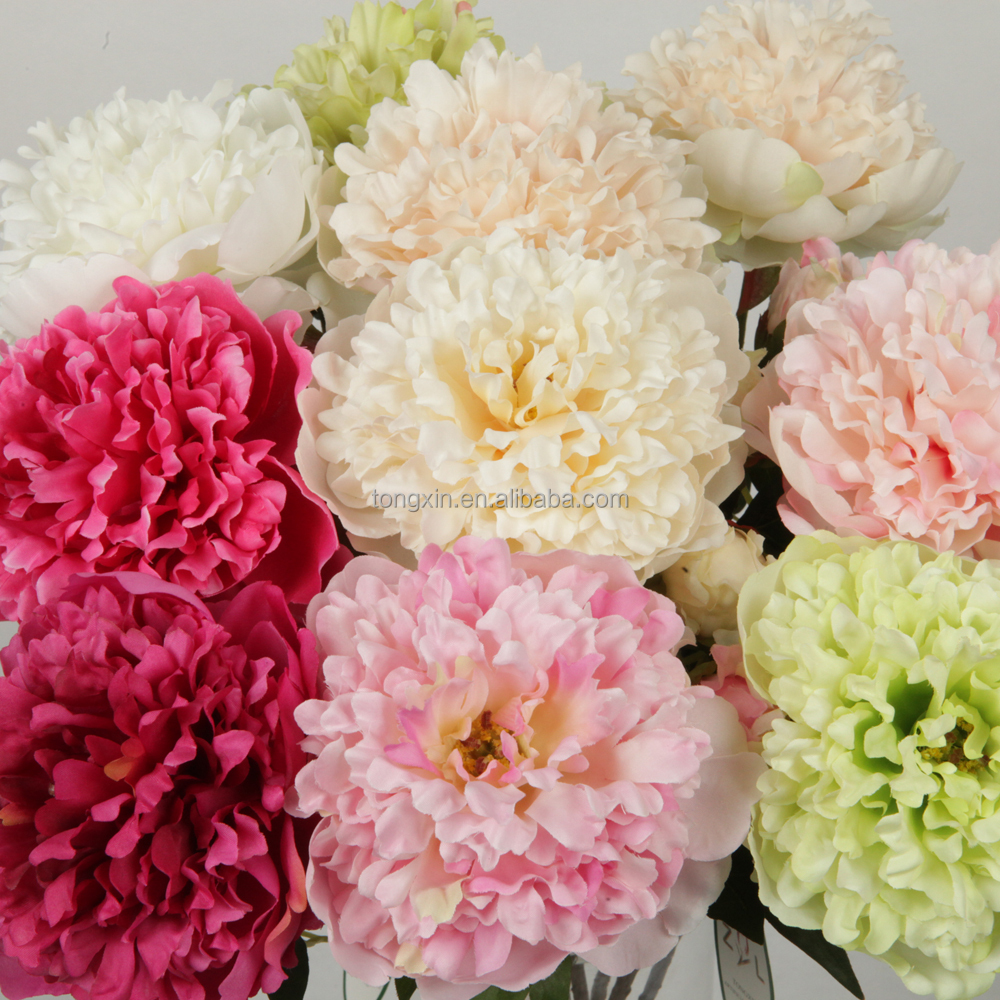 Large Pink Single Flowers Large Pink Single Flowers Suppliers And