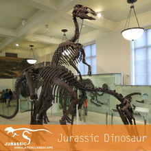 Original Size Dinosaur Fossils For Sale Artificial Fossils