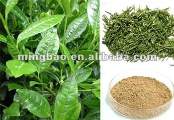 Instant Tea Powder Green
