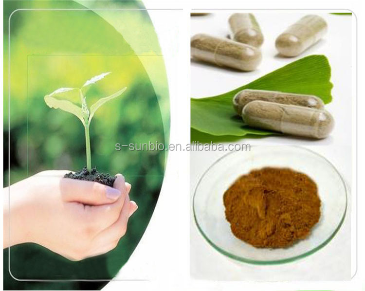 Herbal anti--oxidation Mulberry Leaf Extract powder