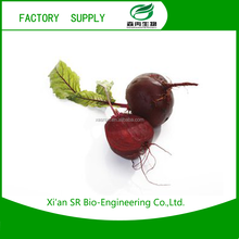 Professional Herb plant extract ingredient additive Red beet root extract